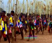 Reed Dance Ceremony. Umhlanga. Swaziland