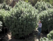 Jorge Cervantes_ Medical Marijuana Outdoor Gardens Tour
